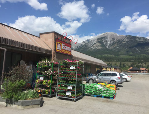 Annuals, Flowers, Plants, Vegetables in Canmore
